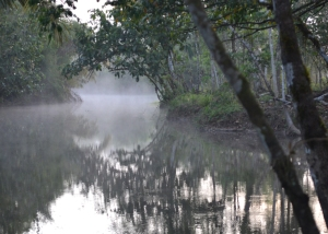 Misty Pocosolito river